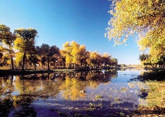 额济纳是世界上仅存的三大胡杨林地之一