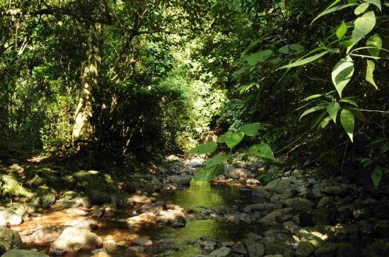在这片神秘的热带雨林里生长繁衍着海南75%的植物和85%的野生