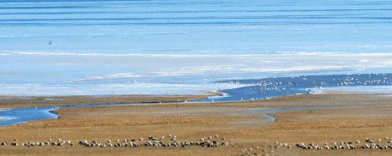 即将封冻的青海湖