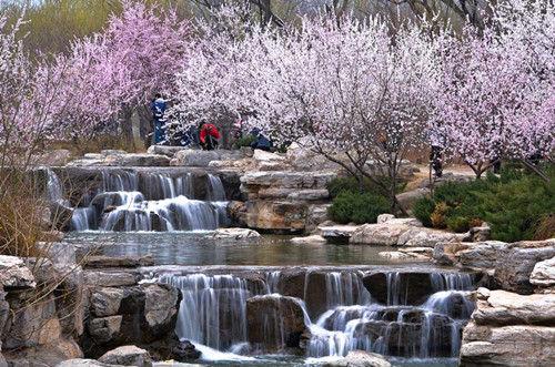 平谷-北京植物园