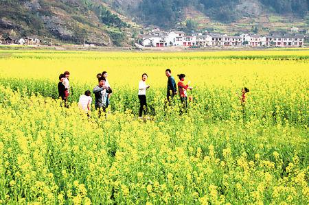 游客在花海里畅游