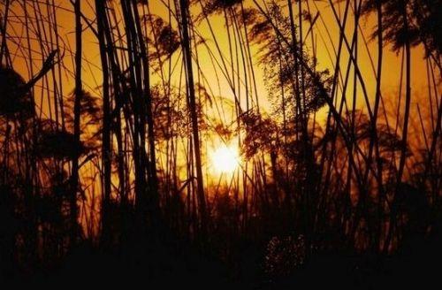 浐灞湿地余晖