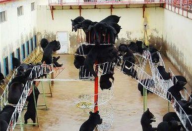 牡丹江黑宝熊乐园