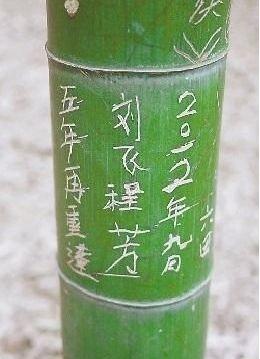 一棵周身被刻满字的竹子