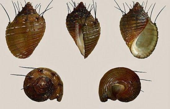 蜗牛身体结构图片