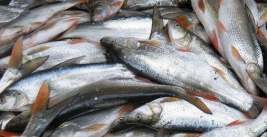 鱼的剪纸步骤大全图解