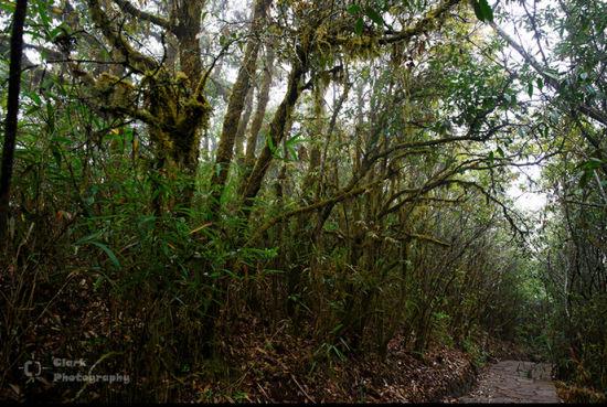 小清新风格森林  树