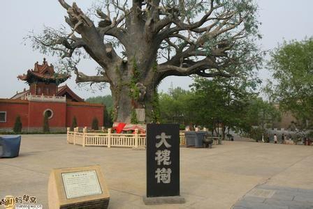 山西大槐树景区参展天津旅博会——打造寻根祭祖的