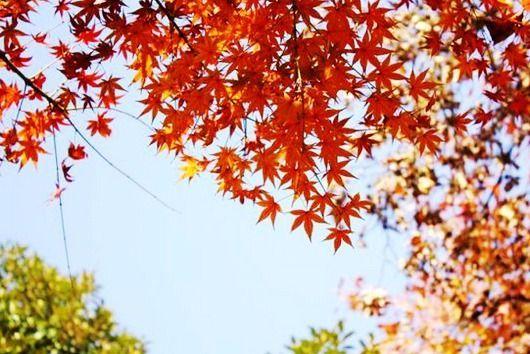简单枫叶剪纸步骤图解
