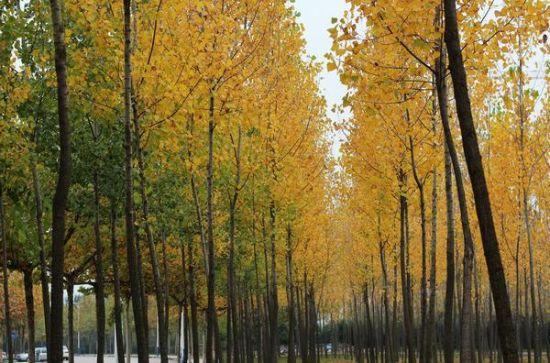 陕西醉美八大校园秋色,风景与公园媲美,~~你们学校上榜 ...