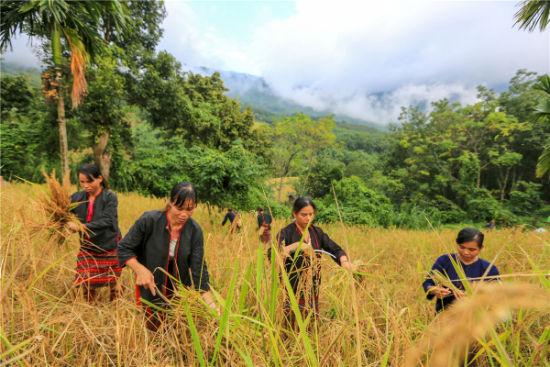 过程,还体验了舂米和推磨这些平日里