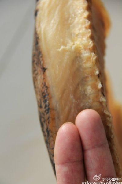 新浪旅游配图:狗鱼脊背肉两指多厚 图片来源:@乌苏里江特产