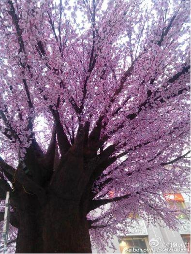 新浪旅游配图:许愿树 图片来源:@金鱼bu愚