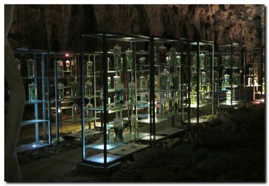 溶洞内的植物展示架 图:新浪博主/夕阳梅居士