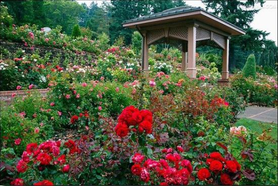 小镇有五大区域,其中的亲子主题包含亲子漂流,浪漫玫瑰园,农家动物园