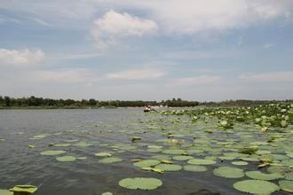 衡水湖 新浪河北旅游配图
