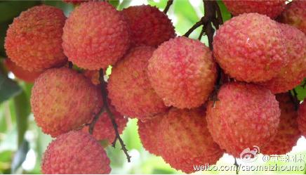 个头适中的荔枝鲜香诱人 作者:草莓周末 图片来源:新浪微博