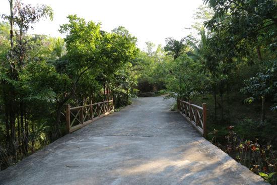 兴隆热带花园世界 在雨林深呼吸看兰花