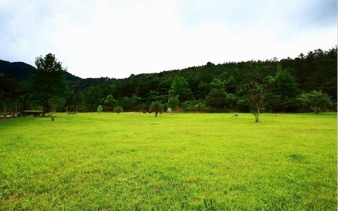 十万大山绿树成林 图:新浪博主/木木成不成林