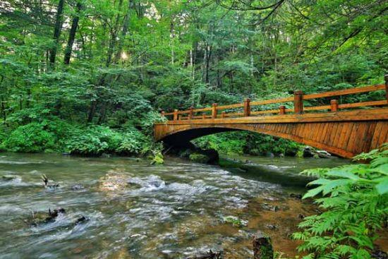 阳光 木桥手绘图片