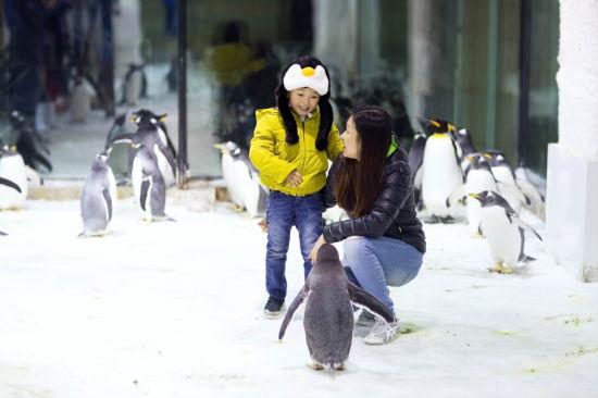 在大连圣亚海洋世界与企鹅零距离