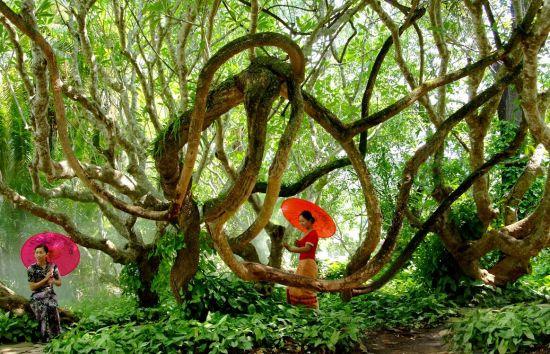 美丽的热带雨林