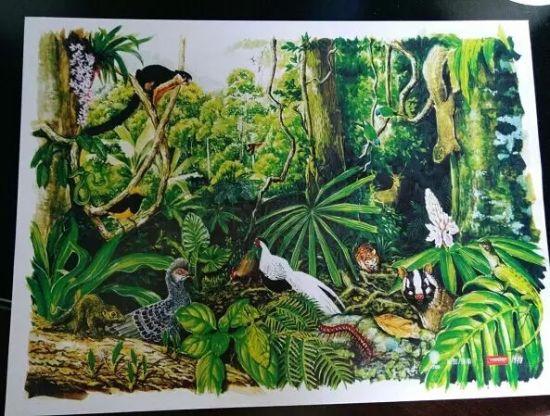 西双版纳热带植物园精美图画