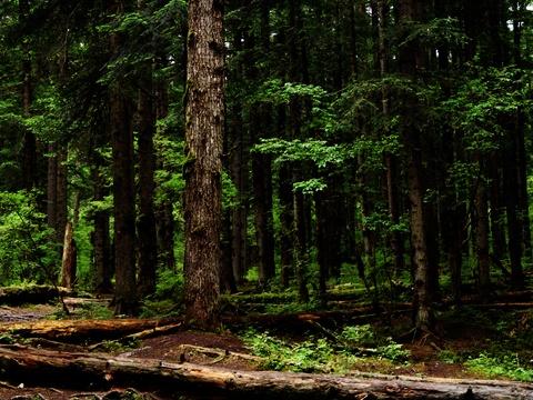 天然氧吧原始森林