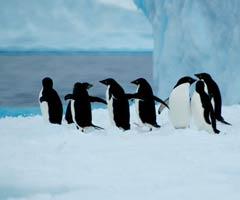 南极行(20) 永远的南极(结束篇)