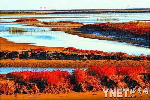 黄河入海口湿地