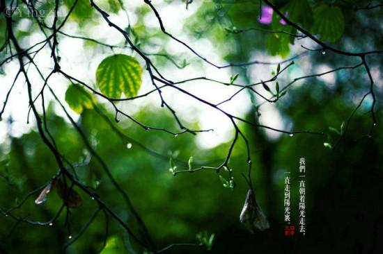 三月物语春之韵 春雨润物细无声|广州|三角梅|阳