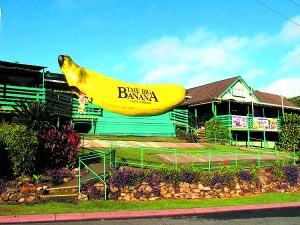 大香蕉-大家伙 帮澳大利亚拉游客