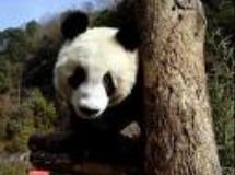 熊猫馆象馆