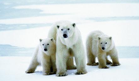 北极南极动物图片