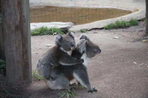 悉尼到墨尔本海滨驾车游