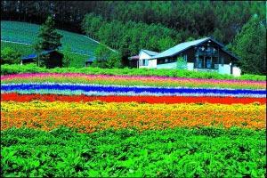 5月到8月是北海道最好的观花时节,粉色的樱花、柠檬色的萱草、橙色的百合、红色的玫瑰、紫色的薰衣草,能满足你关于浪漫的一切想象。 图/CFP