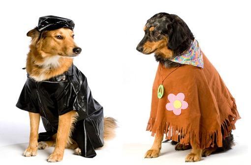组图:动物服装秀鬼节 猫猫狗狗也万圣(2)