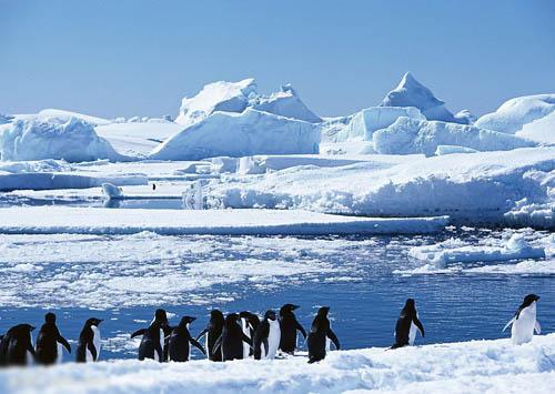 万元就能自助游南极 组图图片