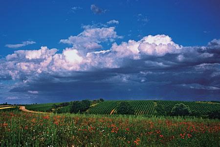 地中海阳光照耀下的普罗旺斯葡萄园。