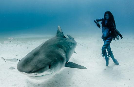 壁纸 动物 海洋动物 鲸鱼 桌面 550_358