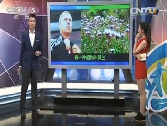 央视借同名植物赞佩兰