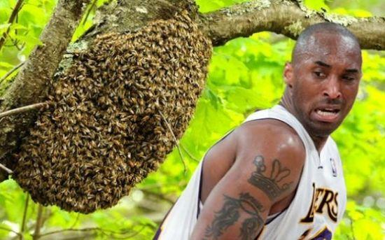 黑曼巴居然怕蜜蜂……