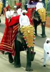 图文-北京奥运火炬传递之新德里 装饰华丽的大象