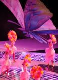 巨型蝴蝶亮相