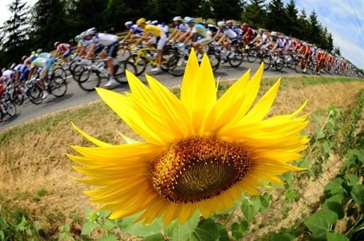图文-环法第13赛段精彩瞬间向日葵是环法一大特色