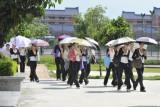 人人举把太阳伞