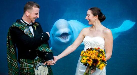 美国水族馆白鲸面带笑容抢镜新人婚纱照。
