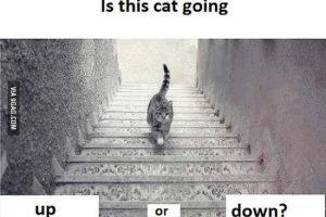 猫咪上楼还是下楼 烧脑图片引发网友争论